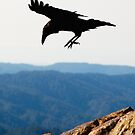 ravens of mount tam by Hannele Luhtasela-el Showk