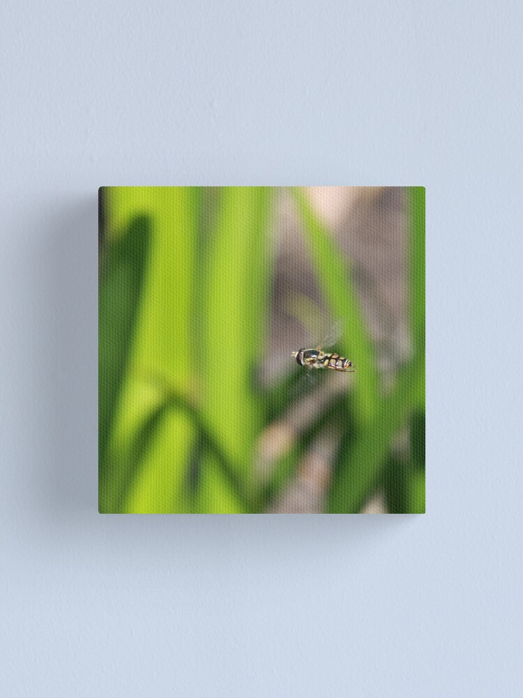 Alternate view of Hoverfly in flight Canvas Print