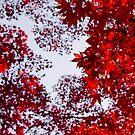 autumn crown by Hannele Luhtasela-el Showk