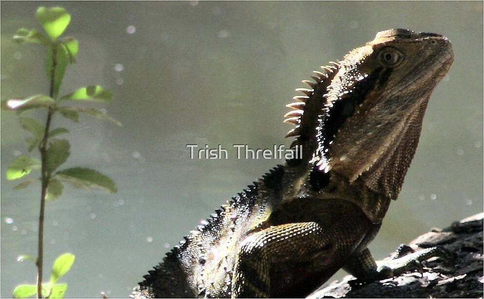 lizard by Trish Threlfall