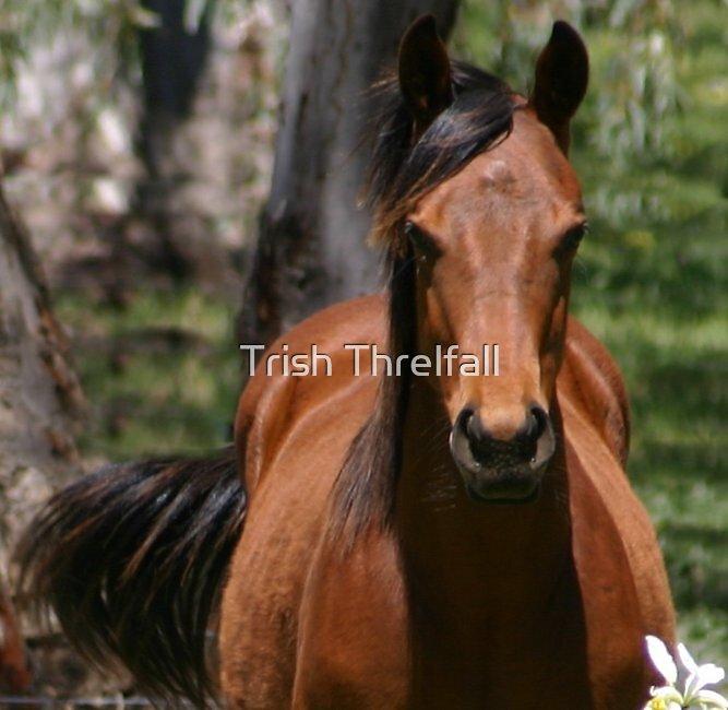 chestnut filly by Trish Threlfall