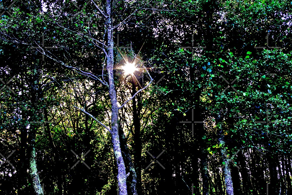 Twinkle in the Trees by Catherine Hamilton-Veal  ©