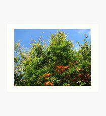 Tree in Early Autumn Art Print