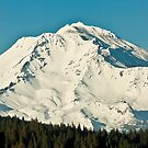 Shasta by Stephen  Van Tuyl