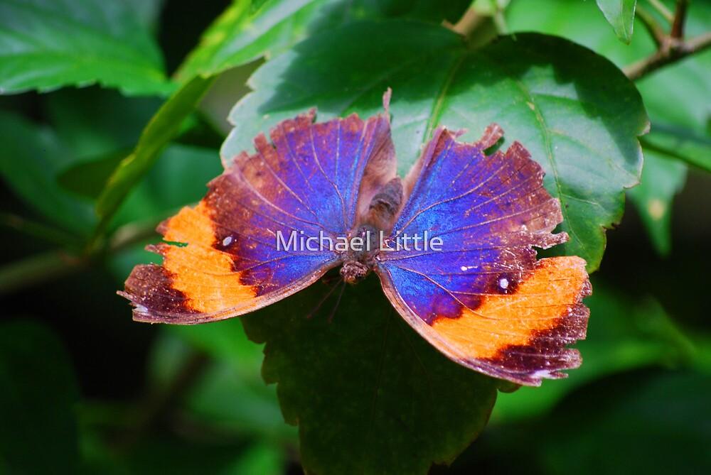 Moth Colours by Michael Little