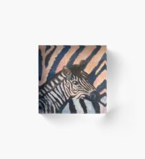 Young Zebra Acrylic Block