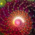 Fractal Art - Fractal Coral by Sven Fauth