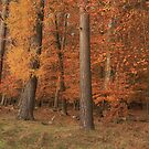 Thetford forest by miradorpictures