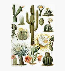 Vintage Cactus Chart Photographic Print