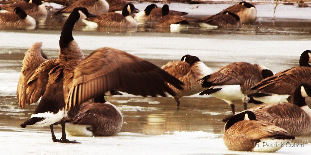 Geese On Ice by Gregory Colvin