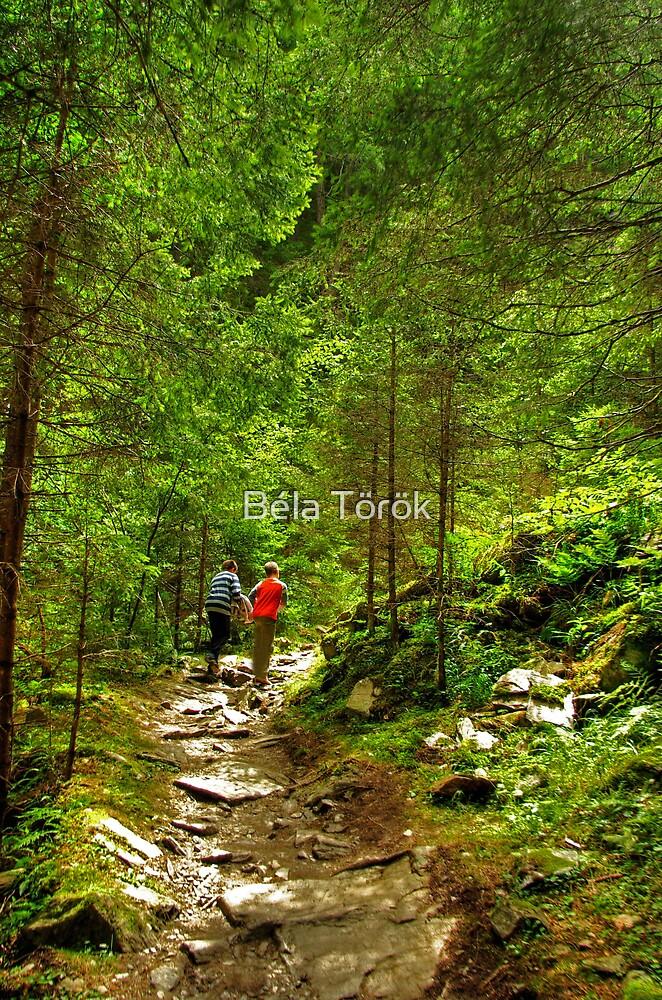 Magical Path by Béla Török