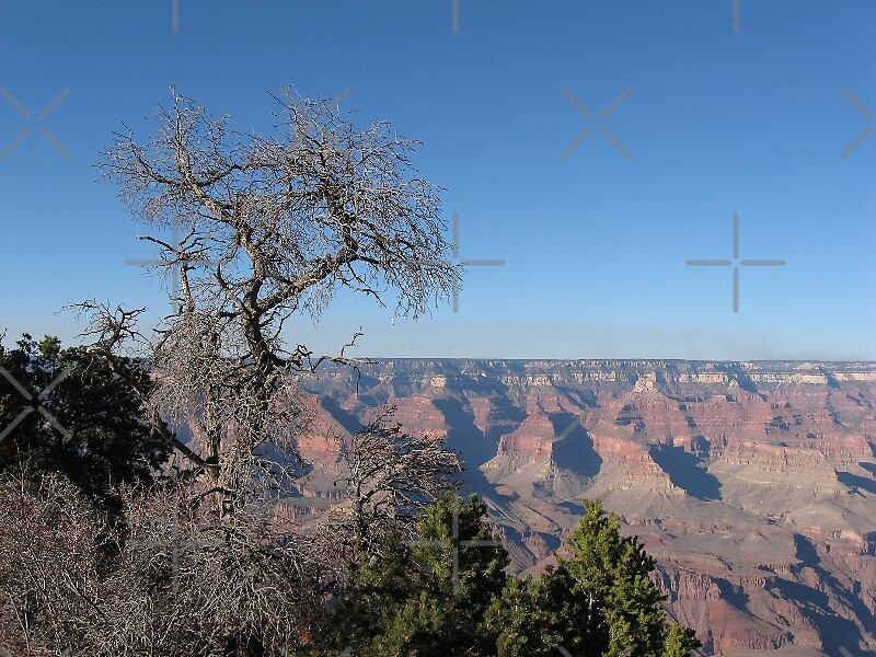 Grand Canyon with grand tree by loiteke