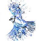 Blue Jay - Bluetiful by Lisa Whitehouse