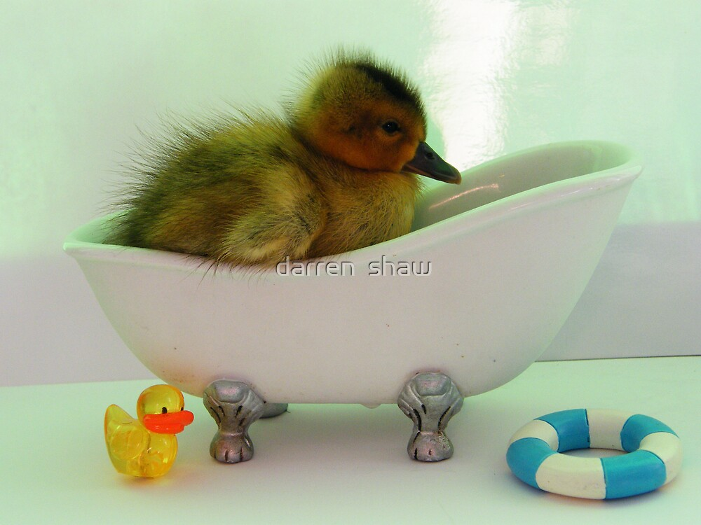 duckys bath night by darren  shaw