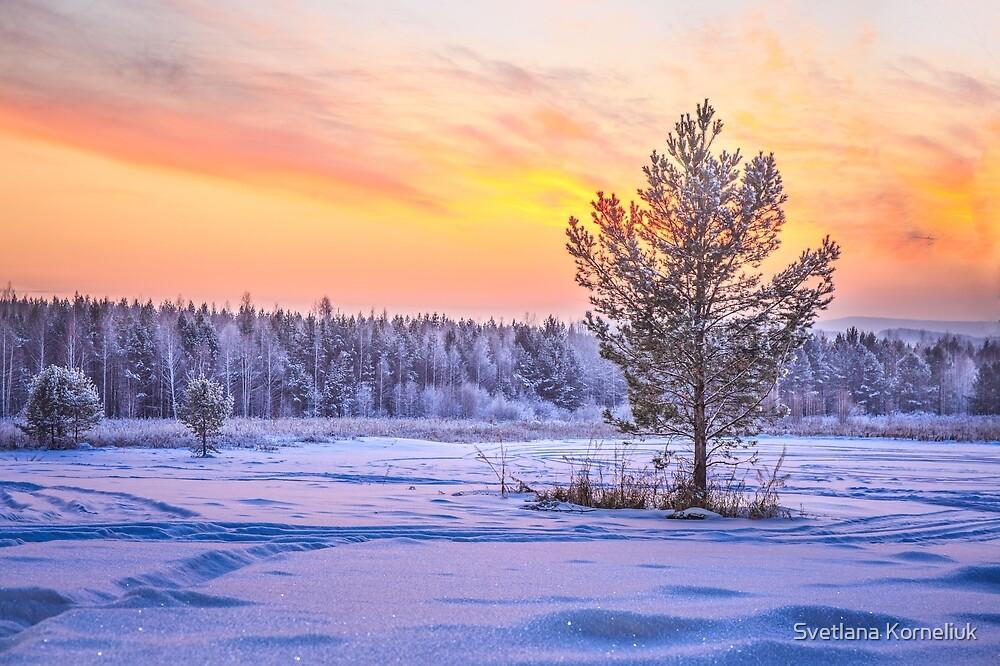 Photographer of the Day is Svetlana Korneliuk
