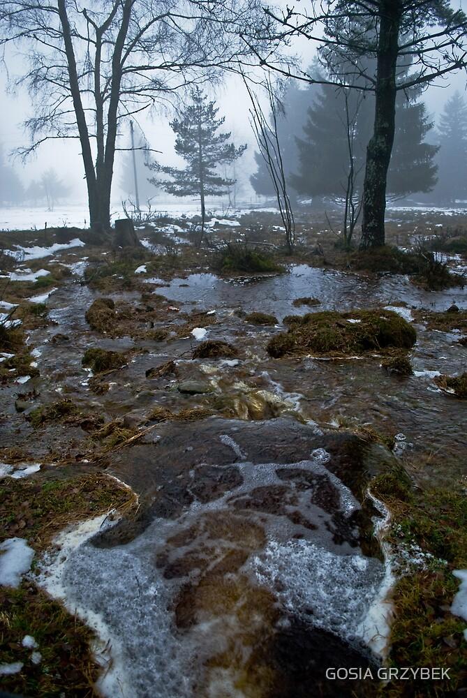 in the fog by GOSIA GRZYBEK