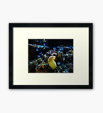 A different type of flower Framed Print