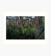 Stringy Bark Forest Art Print