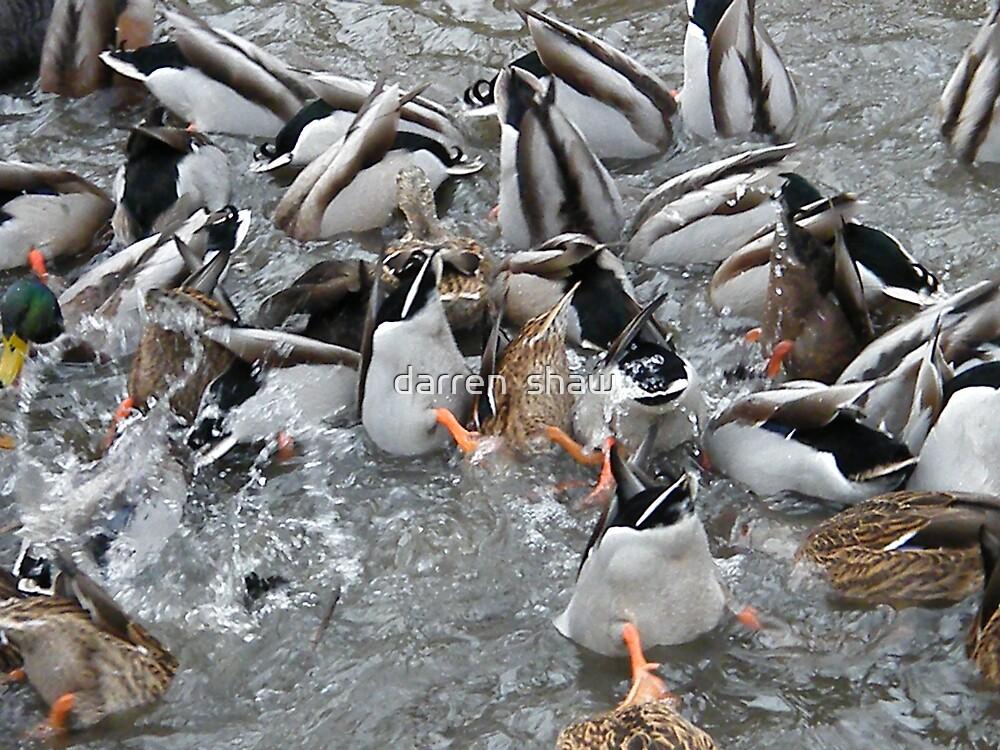 duck splash by darren  shaw
