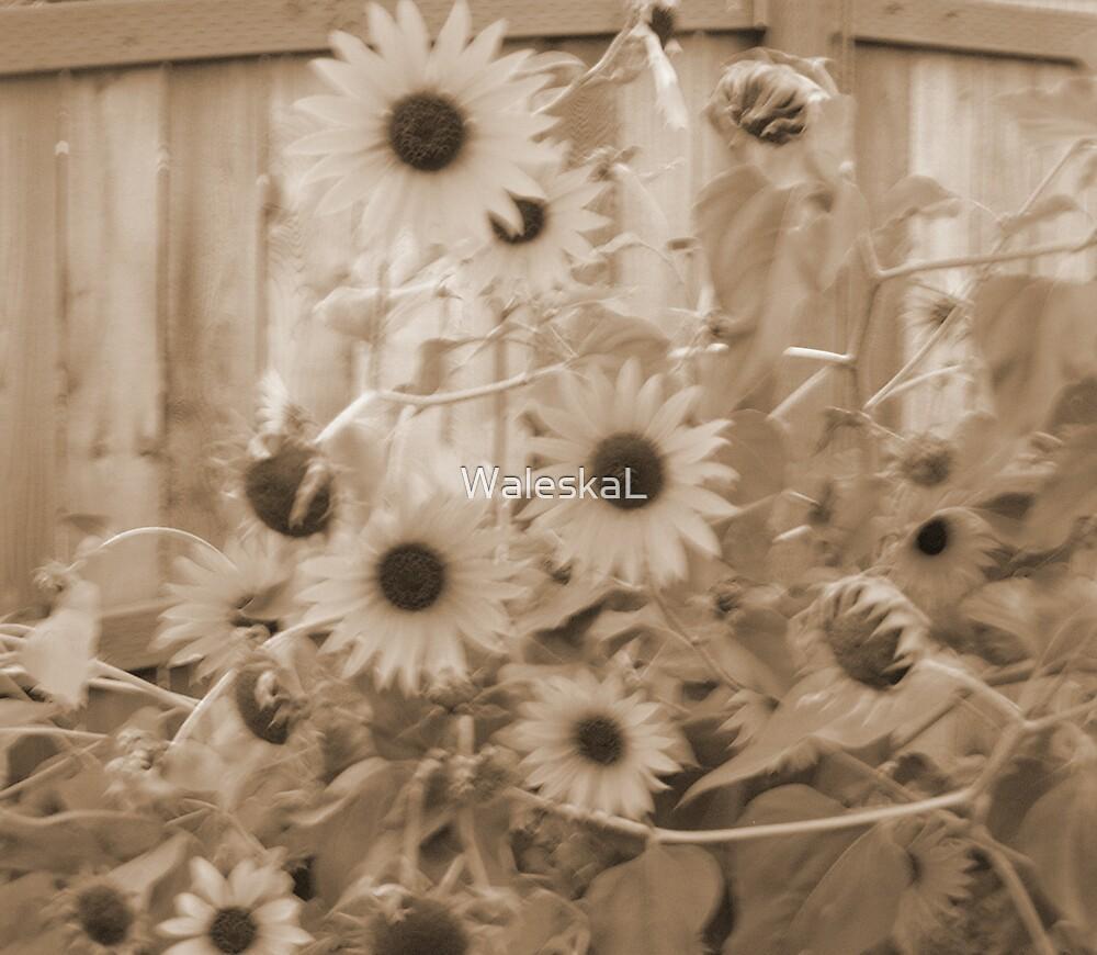 Sunsburnt SunFlower by WaleskaL