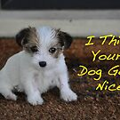 I Think Your Dog Gone Nice by Coralie Plozza