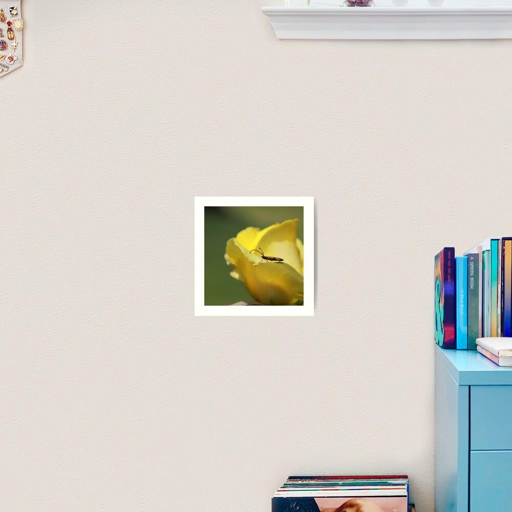 Milkweed bug on yellow rose Art Print