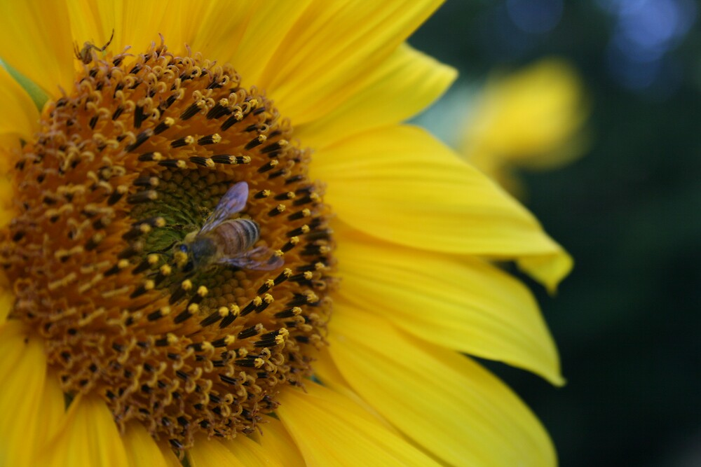 busy bee by Allison Millis