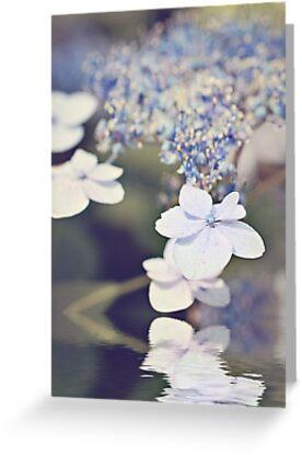 Reflections of a Hydrangea by Lynn Bolt