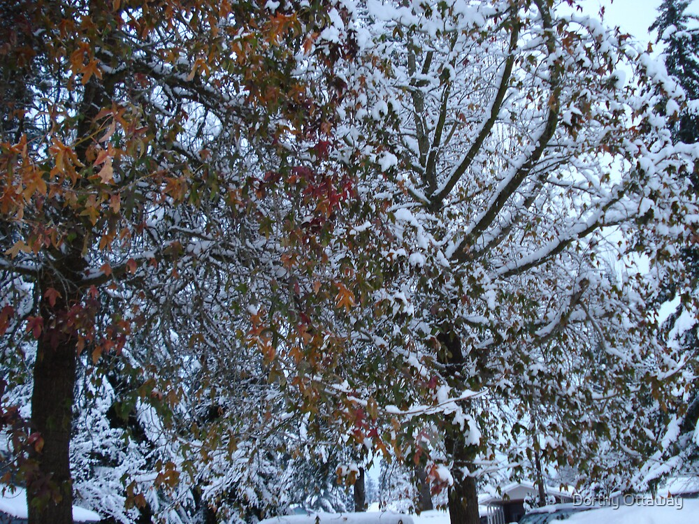 Autumn leaves meet  Winter snows by Dorthy Ottaway