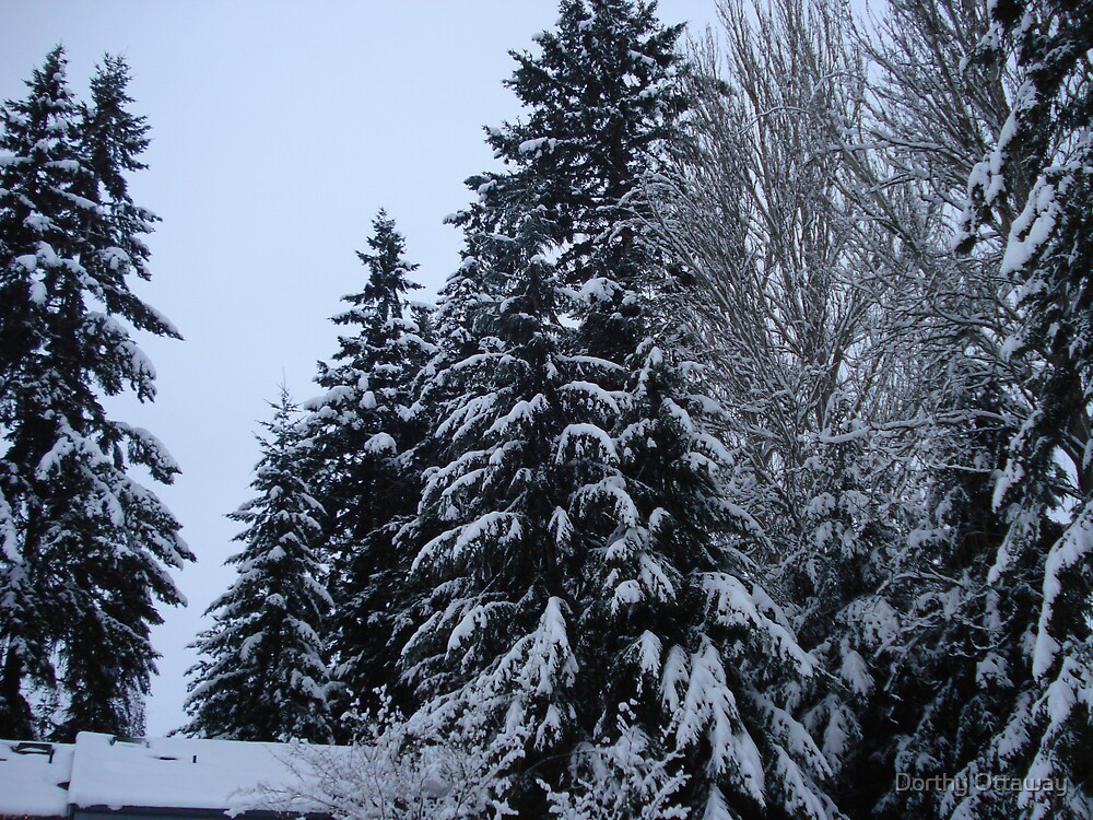 Snow covered trees by Dorthy Ottaway