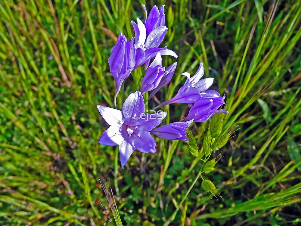 Pretty In Purple by ej29