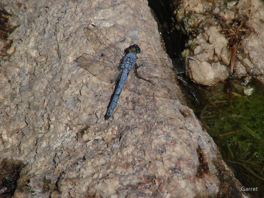 Blue Dragonfly by Garret