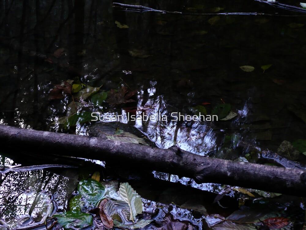 Autumn Reflections by Susan Isabella  Sheehan