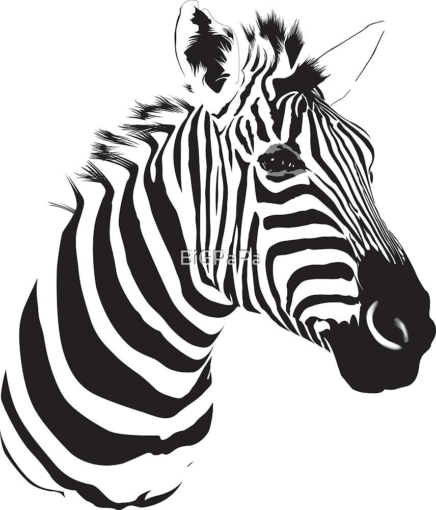 Zebra in Vector by BiGPaPa