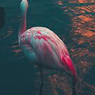 Wavy Flamingo  by Jose Reyes