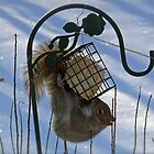 Persistent Pesky Pest Prevails at the Bird Feeder  by Jack McCabe