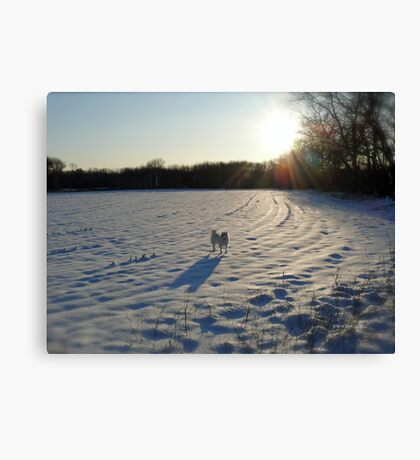 Streaming Sunlight Strikes Snow Aglowing Afternoon Light Canvas Print