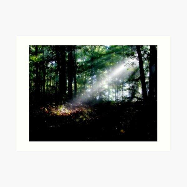 Rays In The Forest Art Print
