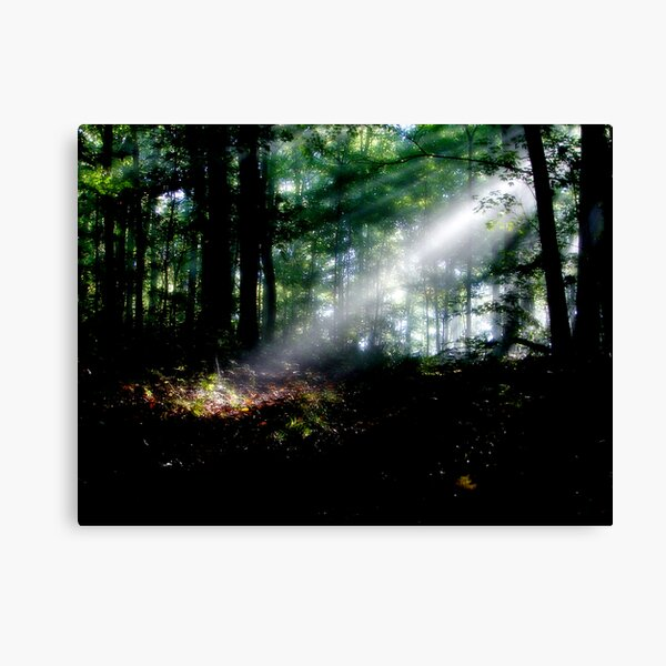 Rays In The Forest Canvas Print