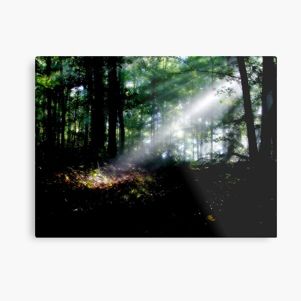 Rays In The Forest Metal Print