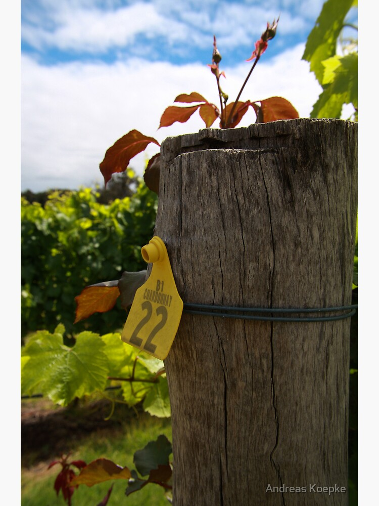 Chardonnay  by mistered