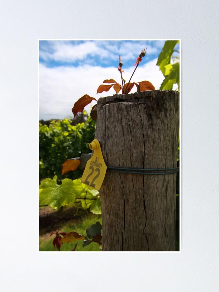 Alternate view of Chardonnay  Poster