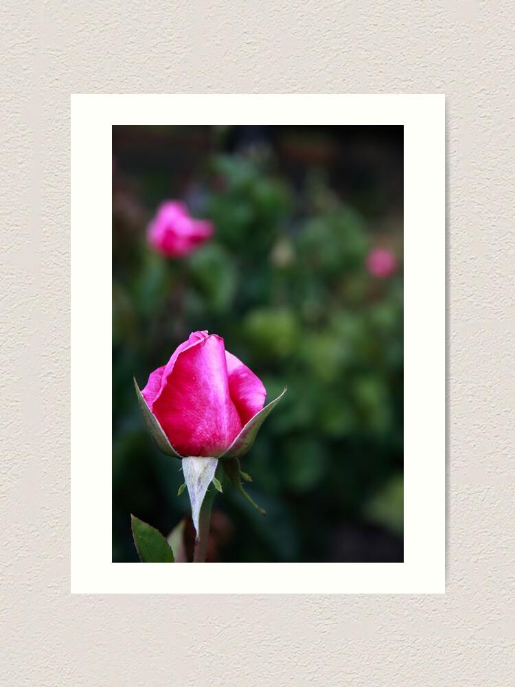 Alternate view of Pink rose Art Print