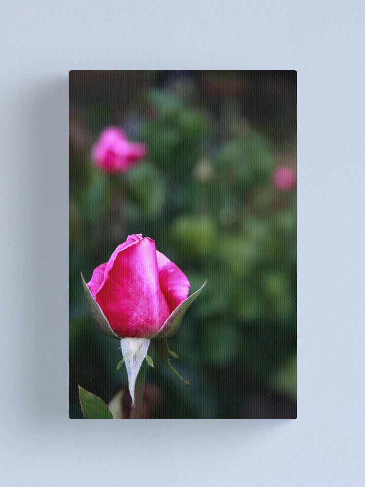 Alternate view of Pink rose Canvas Print