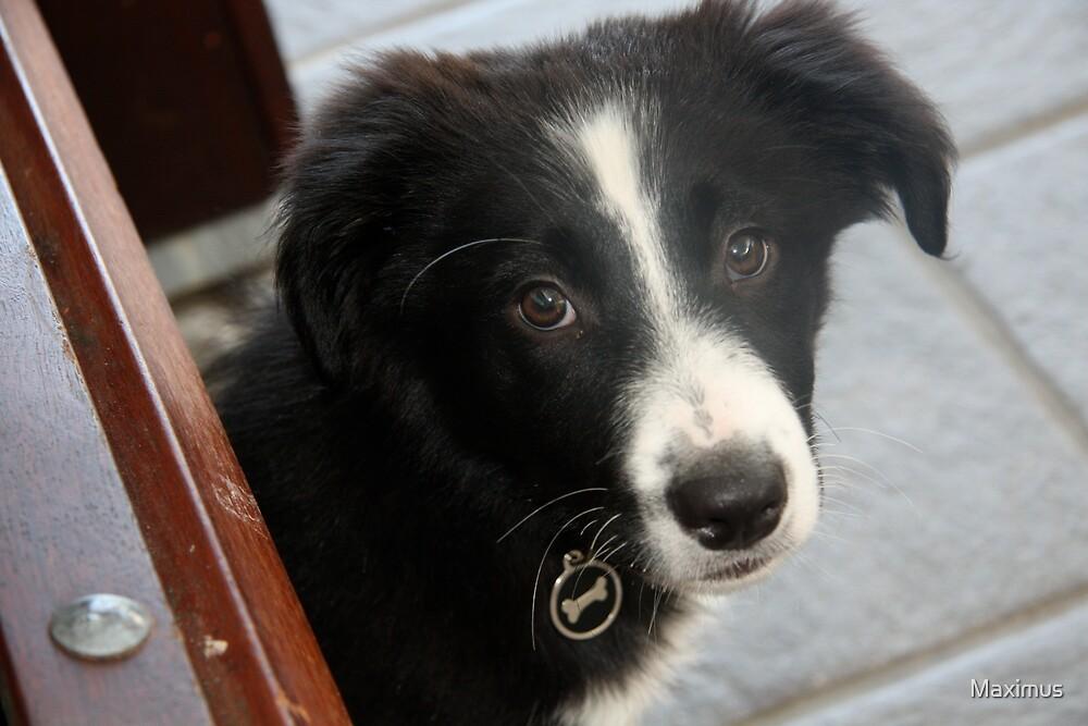 Bella - I's a good girl. by Maximus