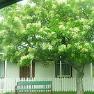 No. 24 A Very Pretty Cottage in Trentham, Vic. Australia by EdsMum