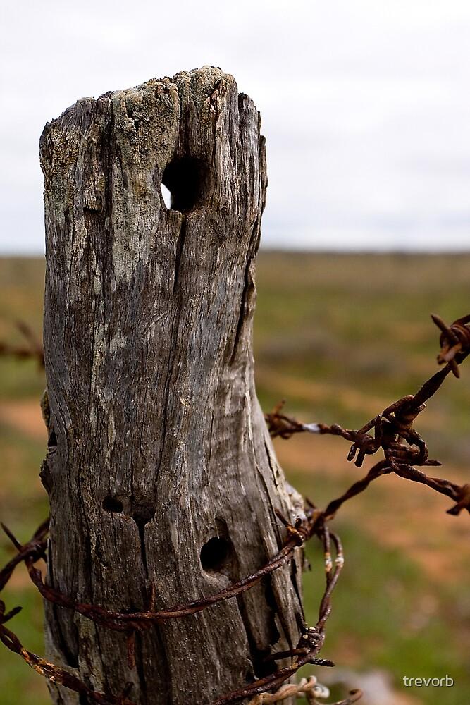 Post & Wire. by trevorb
