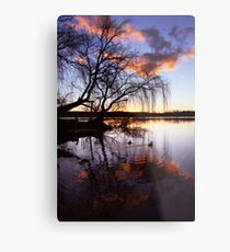 Mannum Willows Metal Print