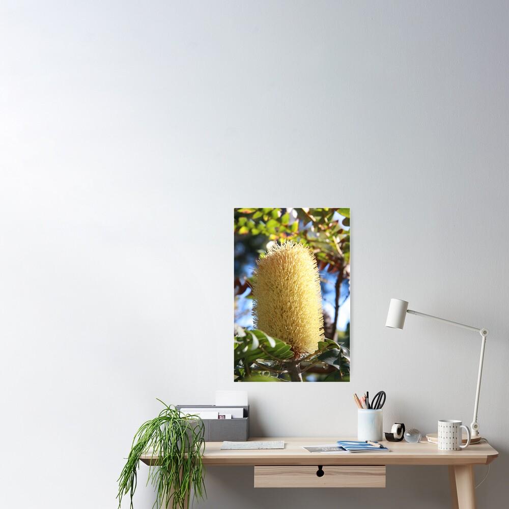 Banksia Flower Poster