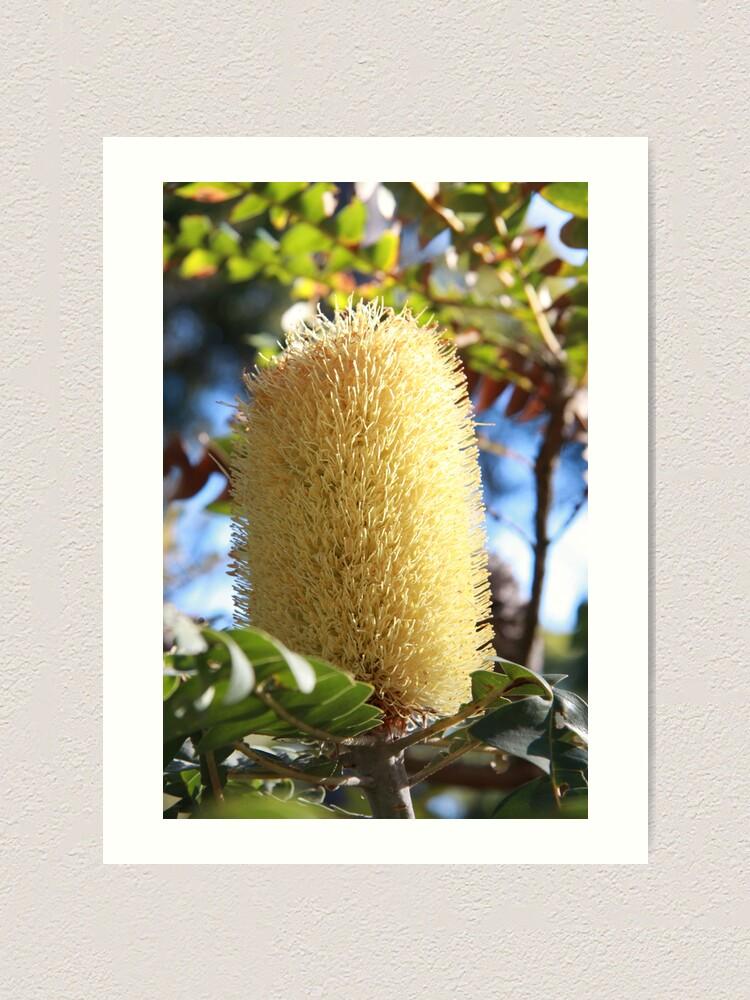 Alternate view of Banksia Flower Art Print